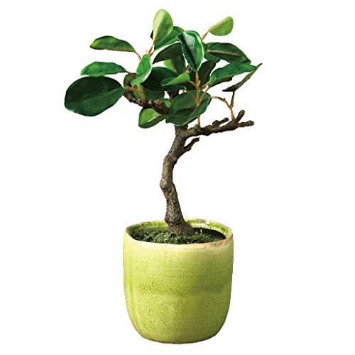 """Time Concept Kunstpflanze Zitronenbaum in Zementtopf, für Innen- und Außenbereich, Dekoration für Haus und Garten Bonsai Banya Tree in Pot - Large, Tall: L 7.09\"""" X W 7.09\"""" X H 11.42\"""""""