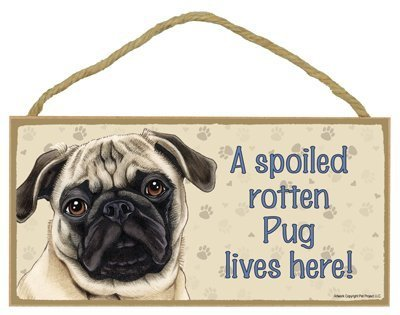 Pug (Brown/tan color) - A spoiled \