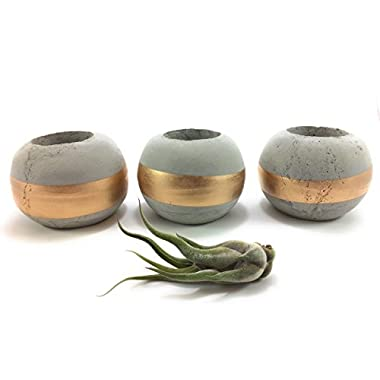 ORB Concrete Succulent Planters/Air Plant Holders (Set of 3) GOLD. Cement Succulent pots. Modern Planter set