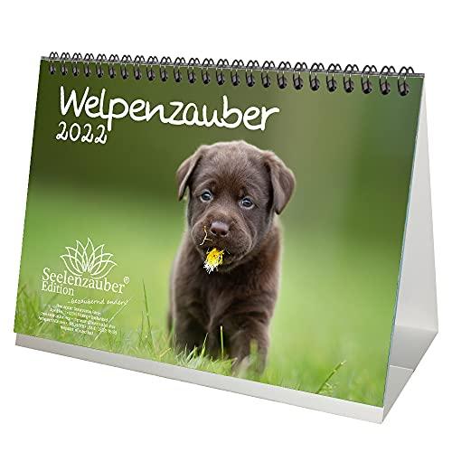 Welpenzauber DIN A5 Tischkalender für 2022 Hunde Welpen - Geschenkset Inhalt: 1x Kalender, 1x Weihnachtskarte (insgesamt 2 Teile)