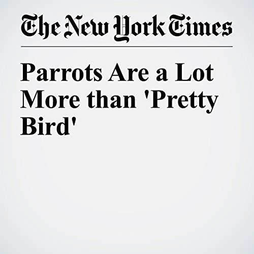 Parrots Are a Lot More than 'Pretty Bird' audiobook cover art