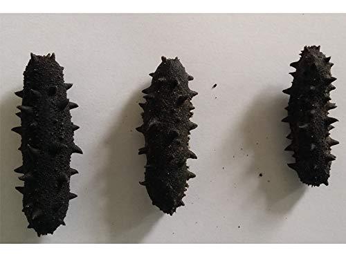 Chinesische eßbare Meerestiere getrocknete Seegurke