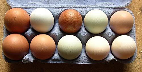 10+2 bunte Hühner-Eier aus Freiland Haltung, von verschiedenen Hühner-Rassen, direkt vom Bauernhof mit Kräuter Fütterung, tages-frische Delikatesse aus der Altmark, auch als Bruteier