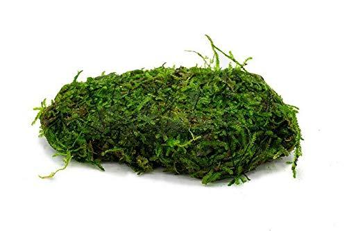 Christmas Moss On Rock Livẹ Aquạrium Plạnt Java Moss