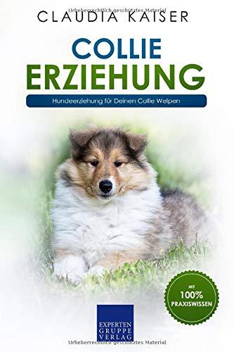 Collie Erziehung: Hundeerziehung für Deinen Collie Welpen