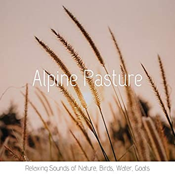 Alpine Pasture: Relaxing Sounds of Nature, Birds, Water, Goats