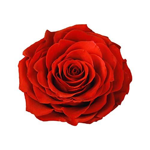 Rosa Eterna Grande,Rosa Eterna Natural,Flores Preservadas Grande,Caja de Rosas,Regalo para Mamá Novia Mujer Día de San Valentín Navidad Aniversario (Rojo)