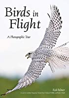 Birds in Flight: A Photographic Essay of Hawks, Ducks, Eagles, Owls, Hummingbirds, & More