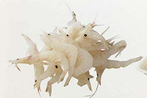 ラス 冷凍 白海老 500g×20P 生食用 冷凍 海老 白えび 業務用
