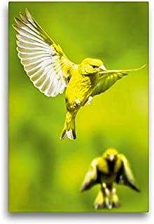 CALVENDO Lienzo Premium de 30 cm x 45 cm de Alto, Dos fincos Verdes en el Vuelo con alas de Gran Precio, Imagen sobre Bastidor, Imagen prevista en Verde (Cloro carduelis) Animales, Animales
