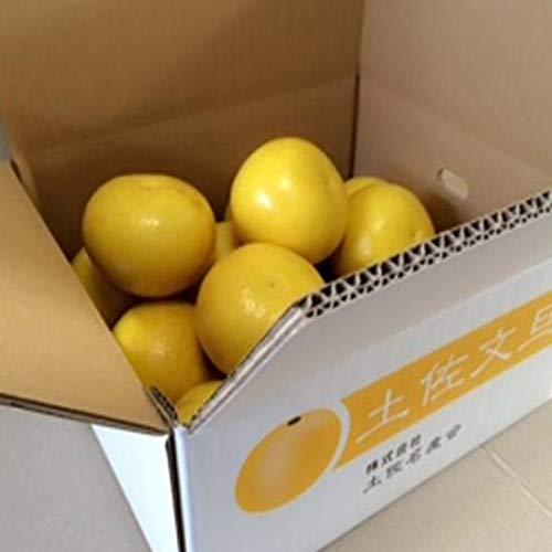 農薬をまいていない 土佐文旦 5kg×2箱 ご家庭用 青山農園 河内晩柑 ザボン 果汁多め 瑞々しい食感