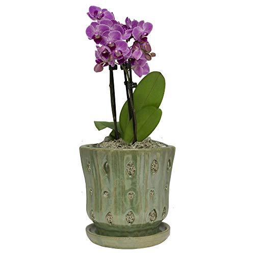 TRENDSPOT 5IN Orchid Pot Taper, Green White Indoor Planter,...