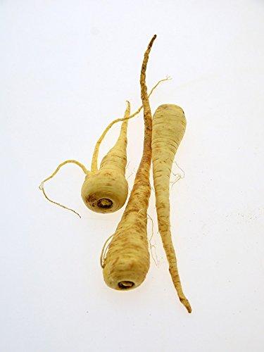 Pastinaken 'Halblange' (Pastinaca sativa) 200 Samen Gemüse-Pastinak-Gemüse des Jahres 2011/2012