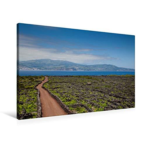 Calvendo Premium Textil-Leinwand 90 cm x 60 cm Quer, Weinanbau auf Pico | Wandbild, Bild auf Keilrahmen, Fertigbild auf Echter Leinwand, Leinwanddruck: Blick über die Weinreben Pico's Natur Natur
