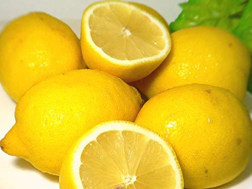 外国(アメリカ/チリ)産 レモン 中玉 約5kg 42個入り