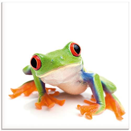 Artland Glasbilder Wandbild Glas Bild einteilig 30x30 cm Quadratisch Natur Tiere Frosch Laubfrosch Porträt mit weißem Hintergrund T5WY