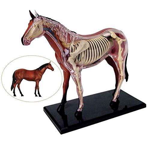 Modelo de anatomía del caballo Visión 4D Desmontable Organo y cuerpo 26 parte para niños niños Amantes de los caballos veterinarios