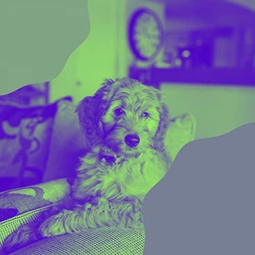 Doggy Music Beats