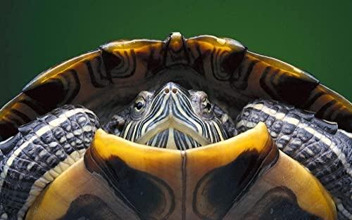 Puzzle da 1000 pezzi per adulti tartaruga adulti puzzle moderno decorazione casa festival regalo parete Art-1500