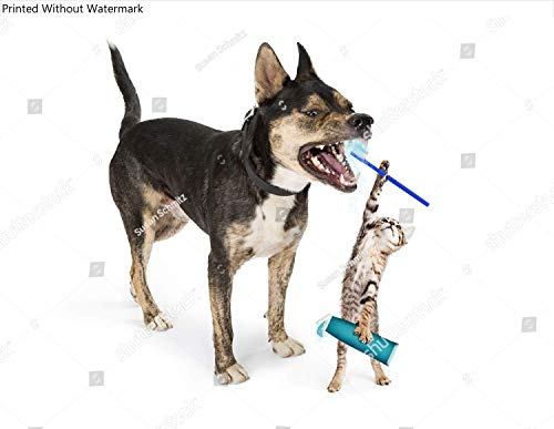 KwikMedia Poster of Funny Little Kitten Reaching up with Toothbrush and Toothpaste to Brush Dog's Teeth