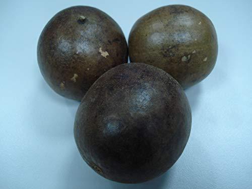 Asklepios-seeds® Siraitia (Momordica) grosvenori, 3 Sementi, Monk fruit, Luo Han Guo, Momordica grosvenorii,Thladiantha grosvenorii