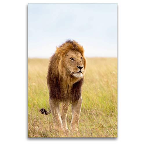 CALVENDO Premium Textil-Leinwand 80 x 120 cm Hoch-Format Wer ist Hier der Chef? Stolzer Löwe mit prächtiger Mähne, Leinwanddruck Verlag
