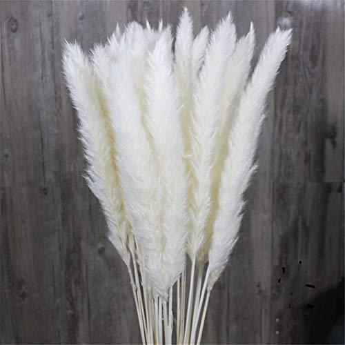 Nicole Knupfer 15 Pcs Künstliche Blumen Gefälschte Blume Trockenblume Getrock Pampasgras Schilfrohr Schilfgras Hausdeko für Hochzeit Hotel Party Dekoration DIY Decor (Weiß)