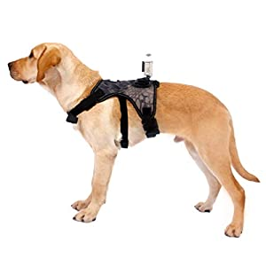Balacoo Dog Vest Harness Adjustable Chest Strap Pet Puppy Harness with Camera Mount for Outdoor Travel (M)