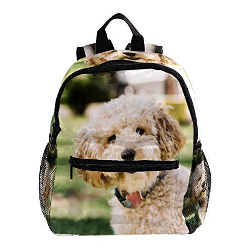 College Backpack, Travel Laptop School Backpack,Middle Student Bookbag,Vintage Casual Daypack for Boys Girl,Dog Having Fun in The Park