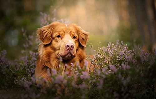 LHJOY coole puzzels voor volwassenen 1000 stukjes Dog scottish terrier