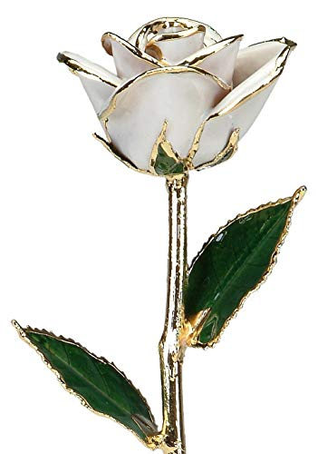 Snow White Rose 24k Gold Dipped