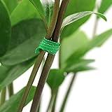 KINGLAKE 200 Stück 10 cm Twist Pflanzenbinder aus Papier, weiche Garten Krawatten mit Metalldraht im Inneren