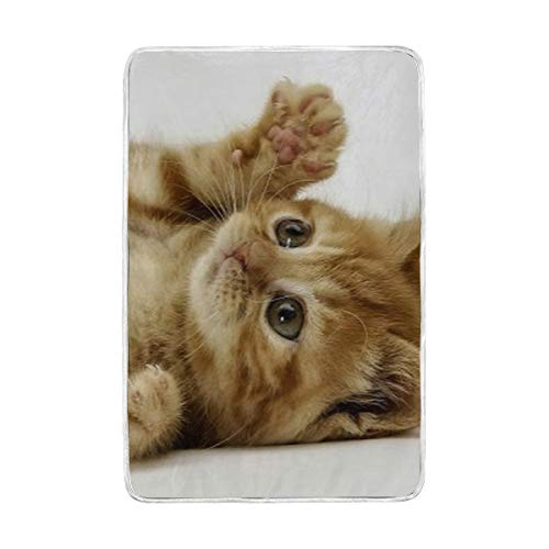 SLHFPX Fleece Plush Throw Blanket Comforter Cute Cat Kittens Faux Fur Soft Cozy Warm Fluffy Lightweight Microfiber Fuzzy Blanket for Bed Couch Sofa Chair Fall Nap Travel Camp Picnic 60x90 inch