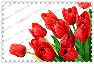 bulbos de tulipán 300true, flor del tulipán, bulbos de flores, las plantas al aire libre, el crecimiento natural de los bonsai, para jardín de su casa