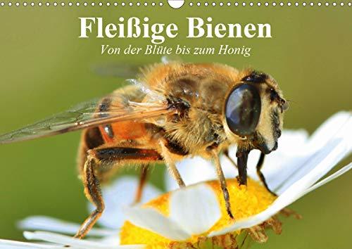 Fleißige Bienen. Von der Blüte bis zum Honig (Wandkalender 2021 DIN A3 quer)