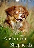 Australian Shepherds (Wandkalender 2020 DIN A4 hoch)