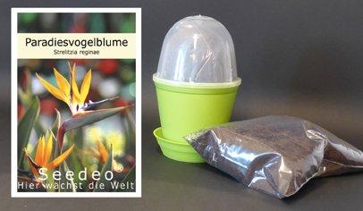 Seedeo Anzuchtset Paradiesvogelblume (Strelitzia reginae)