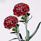 18色がありますカーネーションの種多年生の花鉢植え園芸植物Caryophyllus花の種子200個15