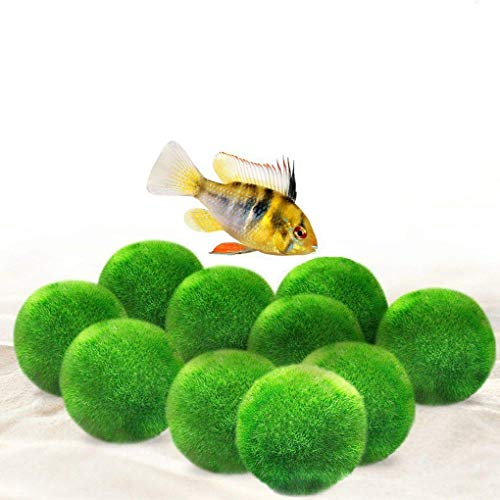 Luffy Cichlid Marimo Moss Balls, Jumbo Pack of Aesthetically Beautiful Plants, Create Healthy Environment for Aquatic Pets, Low Maintenance Live Plant, Shrimps & Snails Love Them, 10-Pack