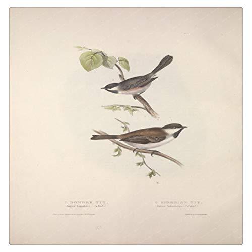 DFSDG Blaue Titten Vögel Leinwand Malerei Vintage Kraft Poster beschichtete Wandaufkleber Wohnkultur Geschenk (Color : Style 3, Size : 30x40cm)