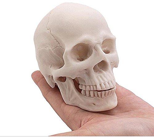 Miyan Collection Value Réplique de crâne humain réaliste Taille S