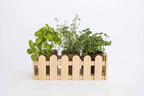 Uncle Ralph Kit de Cultivo Hierbas aromáticas con Jardinera de Madera. Macetero Tipo Valla jardín Plantas y Flores. Growing Kit Siembra Mini huerto (Natural)
