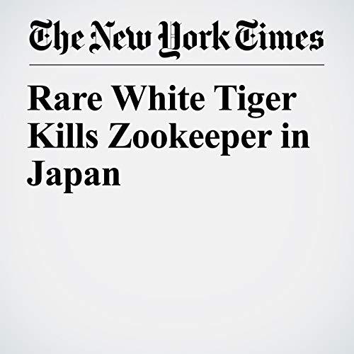 Rare White Tiger Kills Zookeeper in Japan copertina