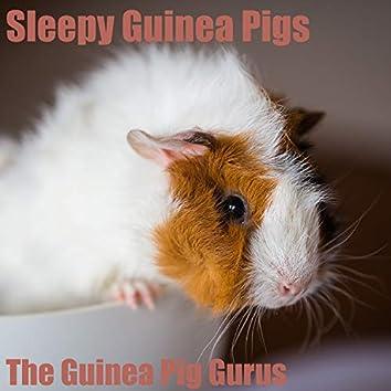 Sleepy Guinea Pigs