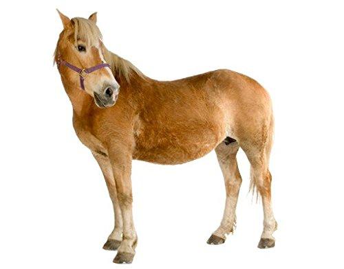 Wandtattoo No.308 Haflinger Pferd Pony Tier Braun Reiten