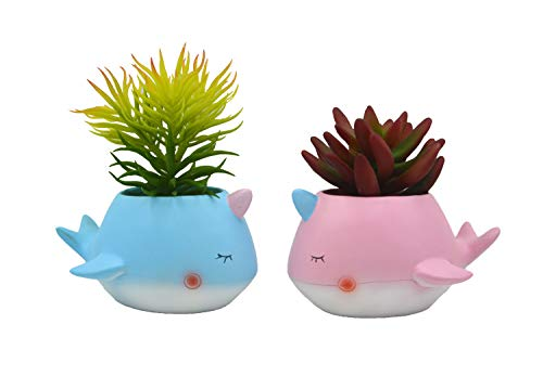 2PCS 3.3Inch Narwhal Planter/Narwhal Succulent Plant Pot/Bonsai Pot/Flower Pot Narwhal Office School Lovers Gift
