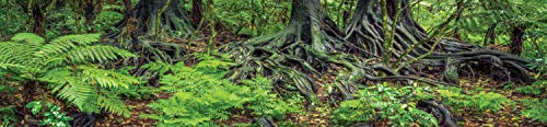 Carolina Custom Cages Reptile Habitat Background; Rain Forest Ferns & Roots, for 48Lx24Wx24H Terrarium, 3-Sided Wraparound
