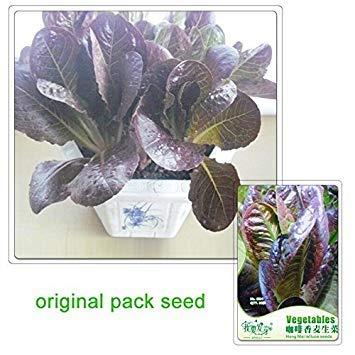 Vistaric 30 graines/paquet, graines de laitues laitue aromatisée au café, bonsaï de jardin avec plantes en pot de balcon