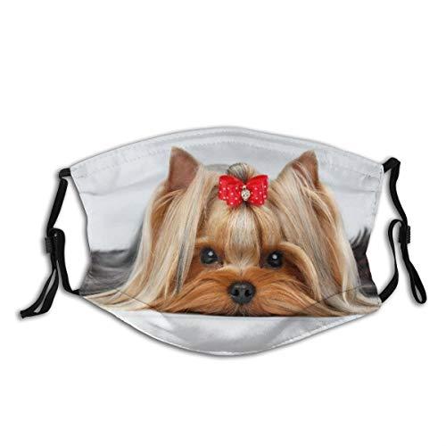 AIMILUX Face Cover,Ritratto di Oseup del Cane dell'Yorkshire Terrier Che Si Trova sul Fondo Bianco,Riutilizzabile Antivento Antipolvere Bandane Bocca da Campeggio all'aperto con 2 filtri