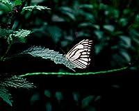 蝶の葉昆虫Diyデジタル絵画数字による現代壁アートキャンバスペイントホリデーギフト家の装飾ビッグサイズ油絵の具カラー原稿 カスタマイズ可能 60x75cmフレームなし